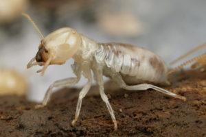 0031_termite_resistant_wood_001